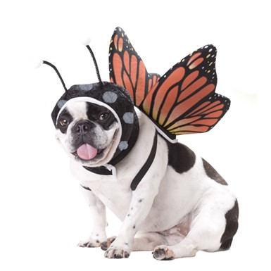 Dog Butterfly Pet Puppy Animal Planet Halloween Costume