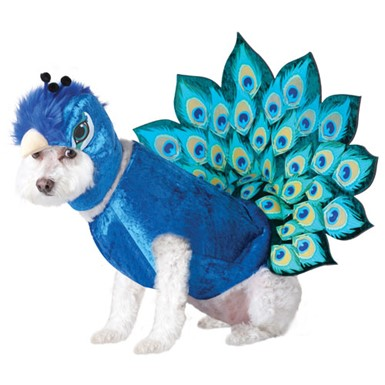 Peacock Pet Halloween Costume