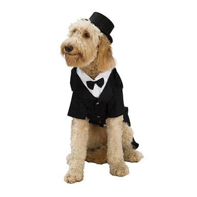 Dapper Dog Formal Tuxedo Pet Halloween Costume